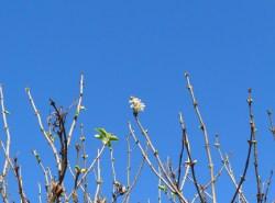 Spring Buds in November