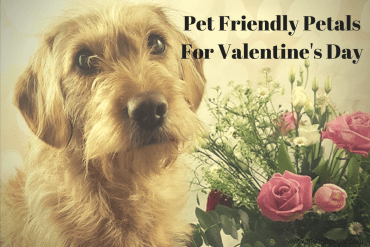 Pet Friendly Petals For Valentine's Day