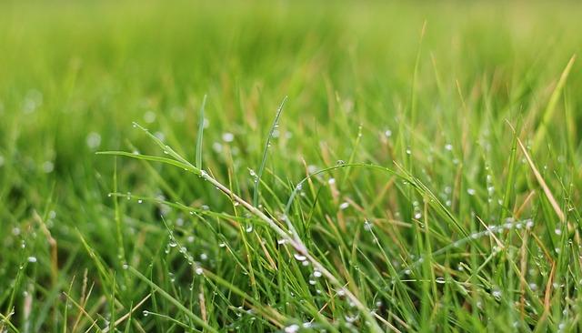 perfect grass in a garden