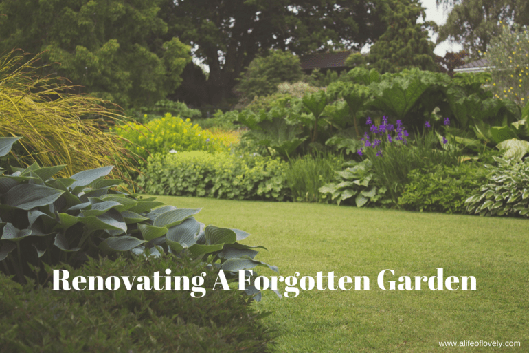 Renovating A Forgotten Garden