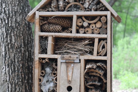 Making Your Garden a Wildlife-Friendly Garden