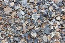 Seaside shells