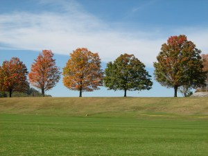 Trees at Sweet Briar College
