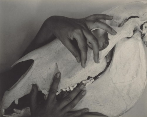 Georgia O'Keeffe: A Portrait, by Alfred Stieglitz