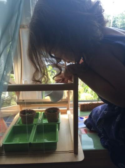 watering basil