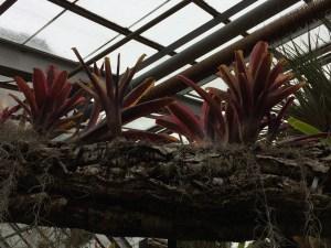 plants interacting