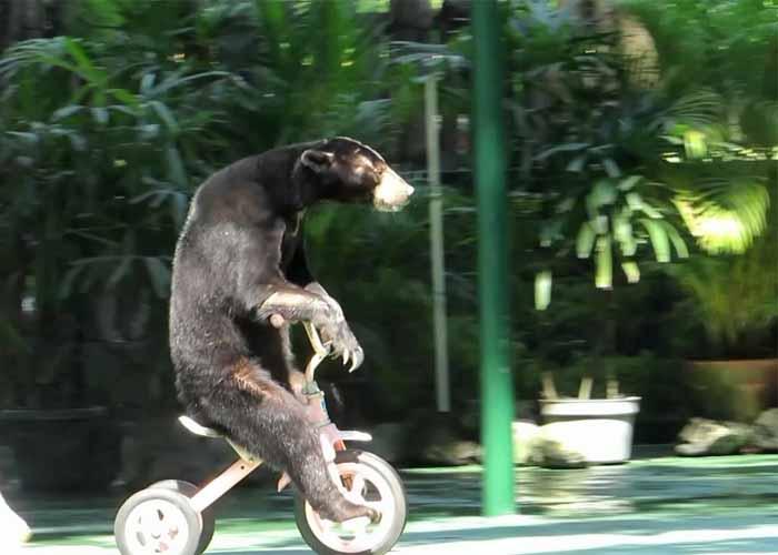 Harga Tiket Masuk Gembira Loka Zoo 2020 Fasilitas Dan Wahana