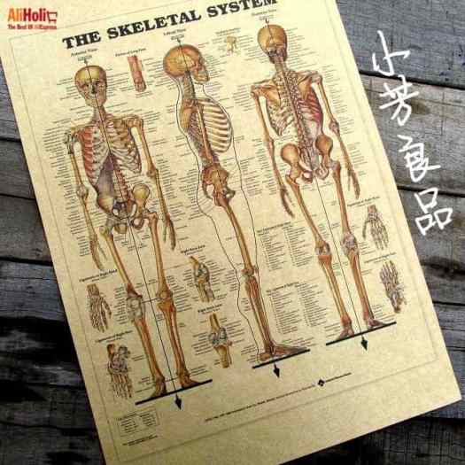 Human anatomy skeleton poster AliExpress