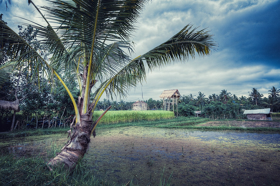 Palm in the Fields, Walking through the rice fields of Bali was an awesome experience. Everywhere you looked it was so beautiful and clean.