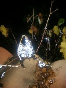 Une nuit, la lumière a rencontré la rosée...