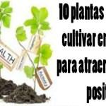 10 plantas que atraen energías positivas
