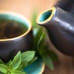 Beneficios de la Stevia como edulcorante natural