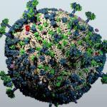 Un sistema inmune 'pasota' evita que el VIH progrese