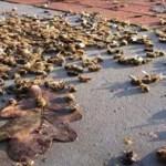 Maryland se convierte en el primer estado en EE.UU. en prohibir los plaguicidas de matanza de abejas