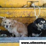 Se querían deshacer de sus perros y los arrojaron al camión de la basura, pero ahora sus vidas han cambiado