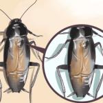 Cómo repeler cucarachas con hojas de laurel y otras hierbas