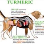Dale a tu perro una cucharada de esta cúrcuma dorada para aliviar la inflamación y prevenir el cáncer