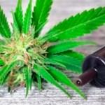 DEA califica tranquilamente el Aceite de CBD como una droga de la lista 1