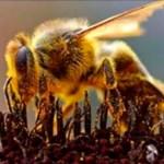 Maryland se convertirá en el primer estado en prohibir los plaguicidas que matan abejas