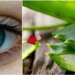 ¡Oftalmólogo Ruso crea remedio natural para mejorar la visión a base de aloe vera, impresionante!