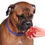 10 alimentos de humanos que es comida saludable para perros