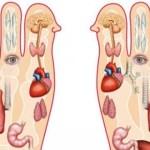 Reflexología de los pies casera: 7 puntos de presión para reducir el estrés y promover la pérdida de peso