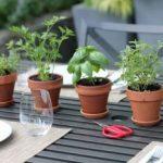 Estas 4 hierbas pueden proteger su cerebro de Alzheimer, depresión, ansiedad y mucho más