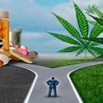 Gran pánico en Big Pharma ya que 80% ahora elige Cannabis sobre las píldoras recetadas