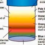 Lo que el color de la orina dice sobre tu salud