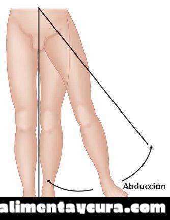 Aducción – Anatomía, movimiento, definición - Alimenta y Cura