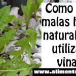 Mi vecino mata las malas hierbas con vinagre, él también compartió sus 6 otras maneras en que cultiva un huerto natural