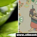"""Es por esto que los antiguos egipcios llamaron al Aloe Vera """"La Planta de la Inmortalidad"""""""