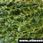 La hierba más poderosa que destruye dolores de estómago, diarrea, artritis, dolor de garganta, virus de la gripe