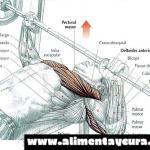 Top 8 mejores ejercicios para pectorales super efectivos