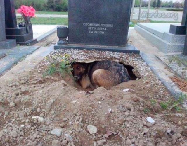 la-pastor-del-cementerio-1