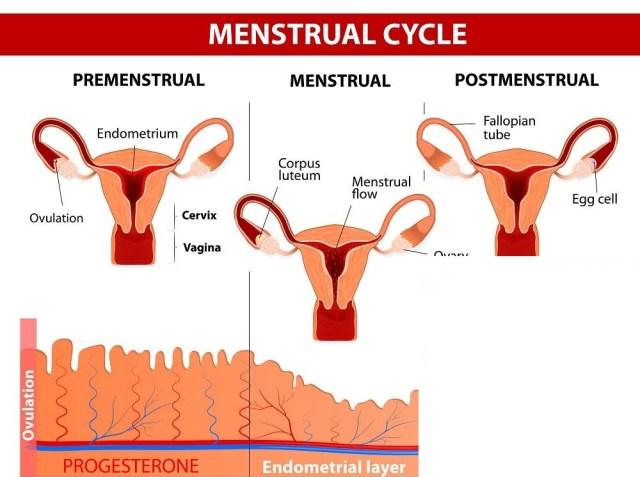 Tu guía para conocer las hormonas del embarazo