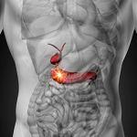 Conoce el páncreas y sus funciones