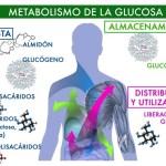 El metabolismo de los carbohidratos y su influencia en el peso