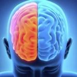 Alimentos para un cerebro sano y mente activa