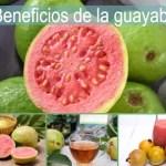Beneficios de la guayaba, las hojas y sus propiedades medicinales