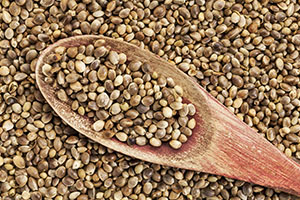 semilla de canamo que aporta proteinas