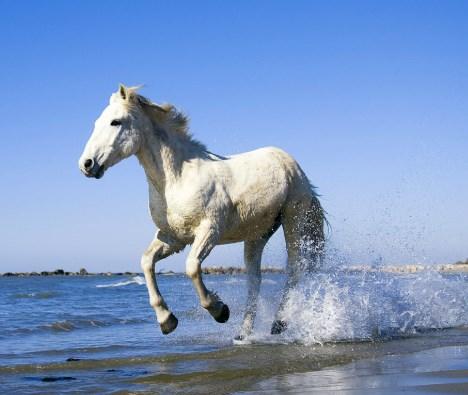 white oil untuk kuda