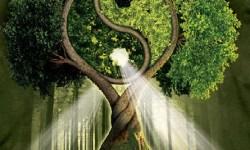copacul fericirii