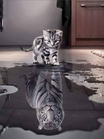 Cat de puternica este imaginea de sine?