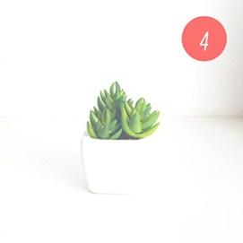 Une petite plante pour créer son petit jardin d'intérieur