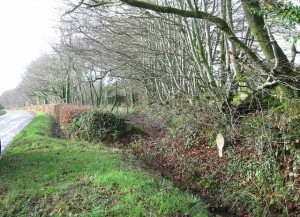 Hedgerows_by_entrance_to_Broadsmoor_Farm_-_geograph_org_uk_-_302594