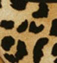 estampa-tigre