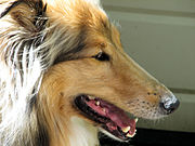 If you have a long, thin snout, you're Dolichocephalic. Picture source: https://upload.wikimedia.org/wikipedia/commons/thumb/e/ed/Lamtara_Golden_Spritzer.jpg/180px-Lamtara_Golden_Spritzer.jpg.