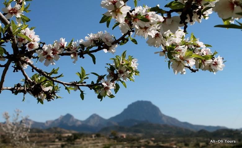 el-florecimiento-del-almendro-1