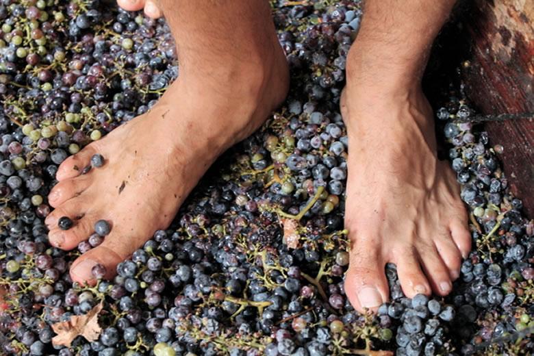 Pisar uva